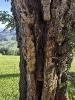 Eine Madonna im Baum